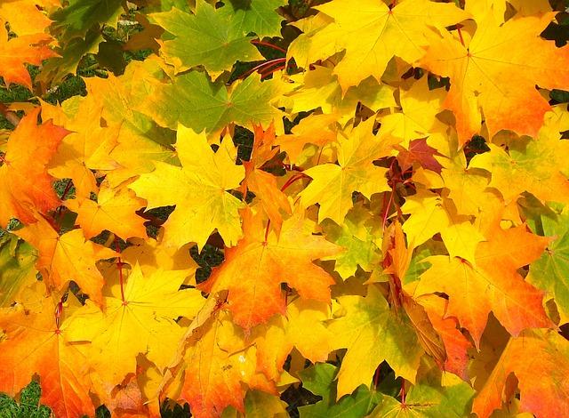 leaves-57427 640