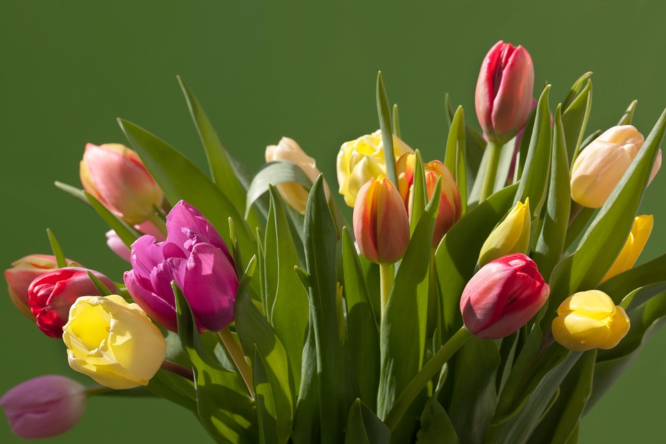 Kevään kukkakurssi